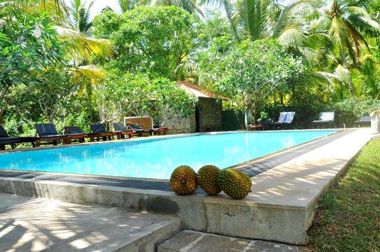 Shangri-Lanka Villa: inviting a dip
