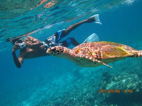 ลิลี่ บีช รีสอร์ท แอนด์ สปา-ออล อินคลูซีฟ: Big sea turtle!