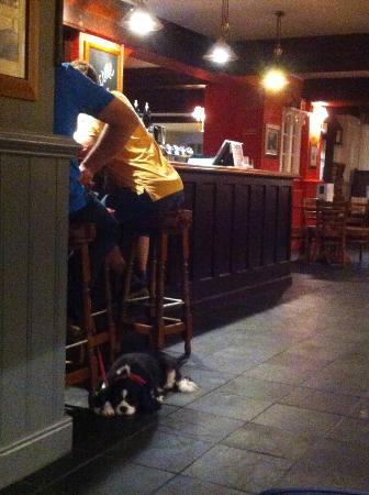 The Fishbourne Inn: downstairs @ pub with bored local dog