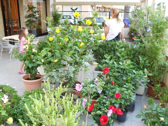 Albergo Perla: ingresso con fiori