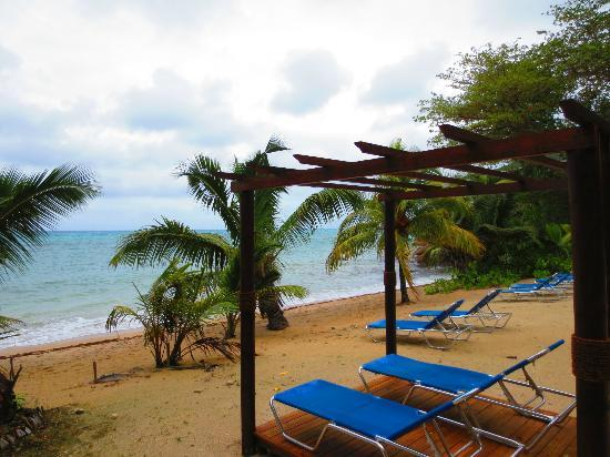 Coco de Mer - Black Parrot Suites: tranquil life on the main beach