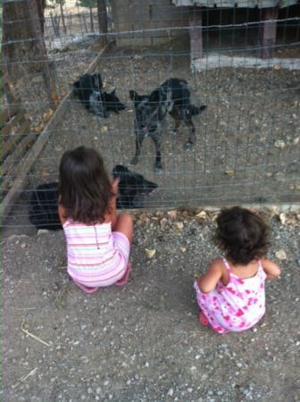Agriturismo Capra Matilda: L'incontro con i cani