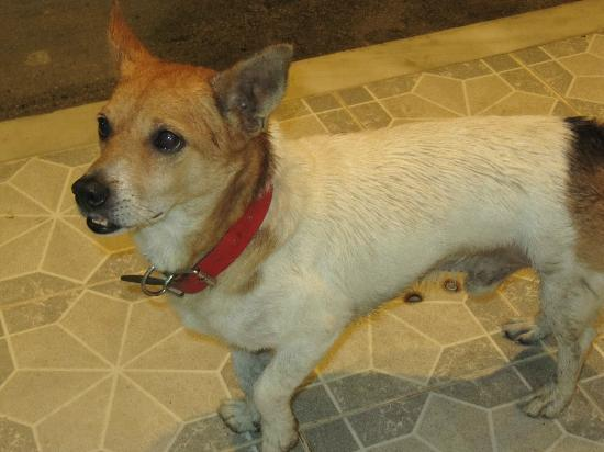 Myrto Apartments: Tito, the dog