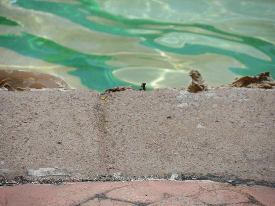 Coral Sea Aqua Club Resort : Toddlers pool