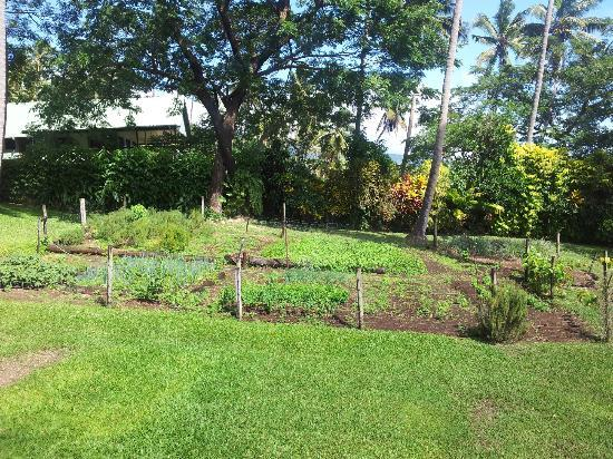 Nakia Resort & Dive : Home grown herbs and veggies