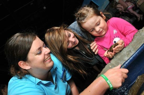 Green Sea Turtle - Picture of National Sea Life Centre, Birmingham ...