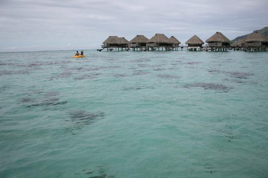 Hilton Moorea Lagoon Resort & Spa: taken from the beach