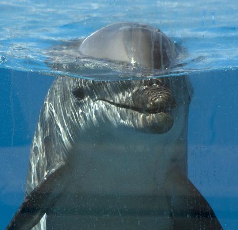 La Pineda, Spanien: Dolphin
