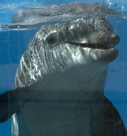 Ла-Пинеда, Испания: Dolphin