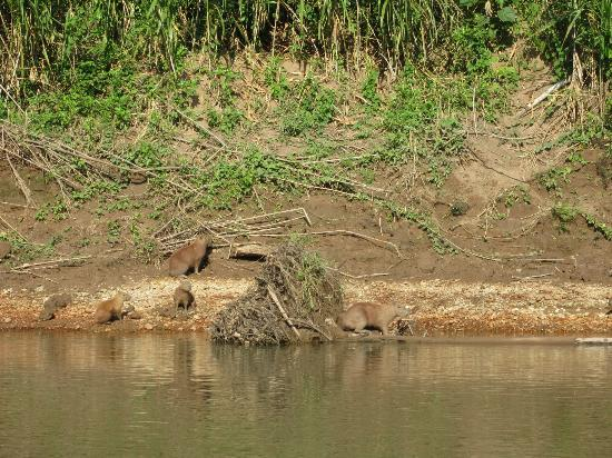 Wasai Tambopata Lodge: on boat trip