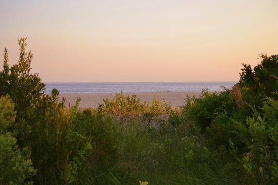 Beach Shack: beach view 