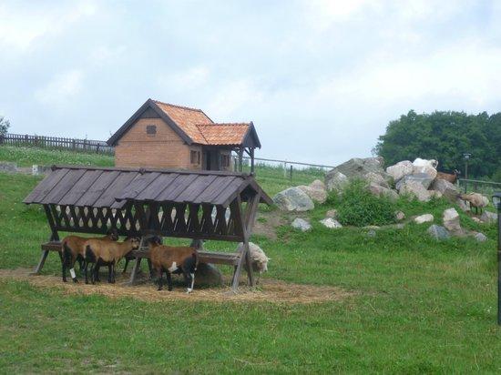 Palac i Folwark Galiny:                   Horses grazing on meadows