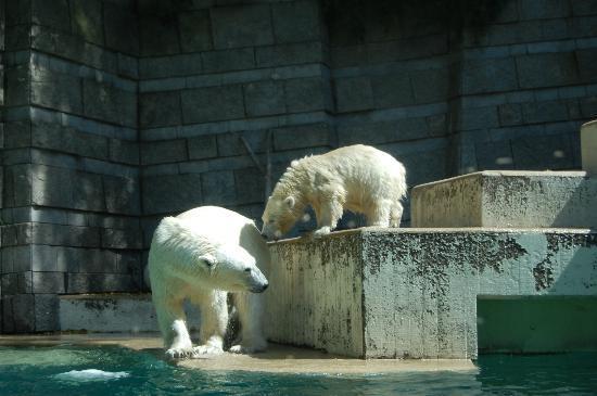 Zoo Wuppertal: Anori & Mutter