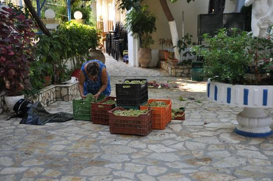 Sebastian's Family Taverna & Accommodation: The crates start to pile up
