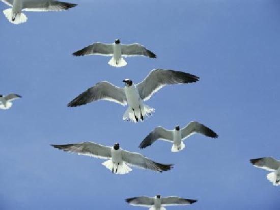 Lark Motel: Seagulls