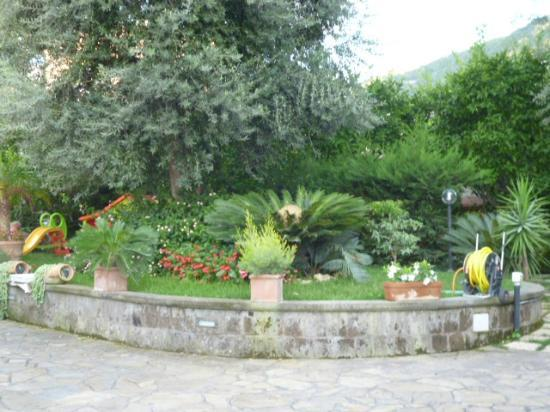 Villa Concetta: Un angolo di giardino con uno dei tanti cycas in fiore
