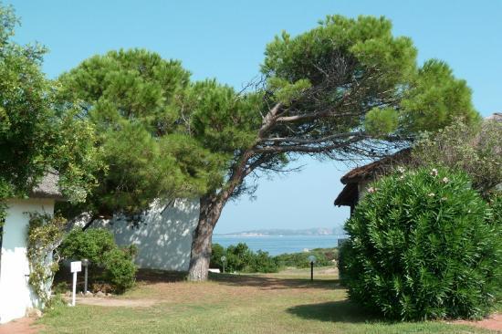 Club Village Forte Cappellini: scorcio del mare dalla piscina