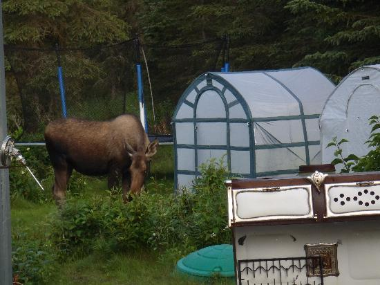 Caribou Crossing Cabins: Garden Visitor