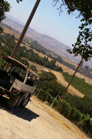 Gundlach Bundschu Winery: Pinzgauer Waiting