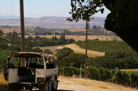 Gundlach Bundschu Winery: The Pinzgauer Waiting to Work