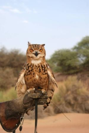 Al Maha, A Luxury Collection Desert Resort & Spa : falconry