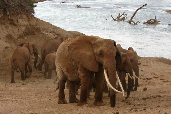 Ora Resort Watamu Bay: Tsavo Est