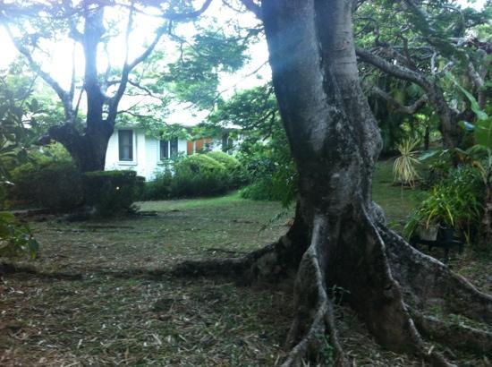 Waipio Wayside B&B: la natura...