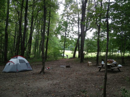 Top of The Caves Campground: View from in the woods