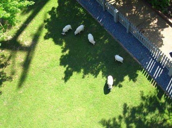 Park Picture Of Busch Gardens Williamsburg Williamsburg