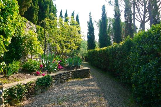 B&B Fagiolari: Lower path between terraced area and olive groves