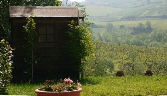 B&B Fagiolari: Pool hut & vineyards