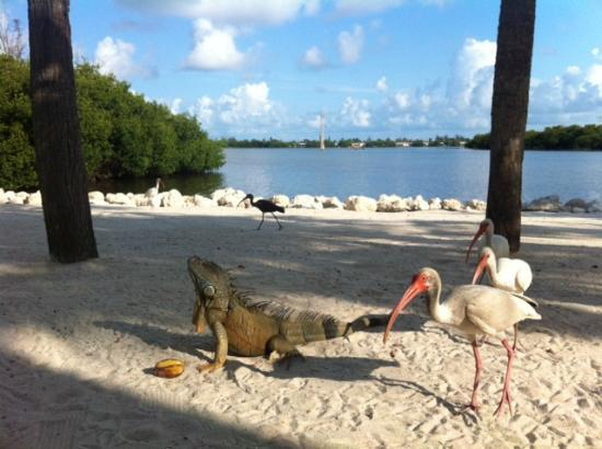 Ibis Bay Beach Resort: these guys were in front of the room!!! and we loved them