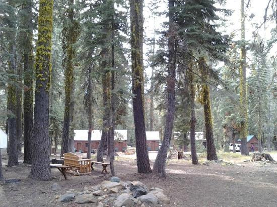 Gold Lake Lodge: View of the cabins through the trees
