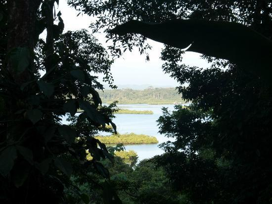 La Loma Jungle Lodge and Chocolate Farm: View from the cabin