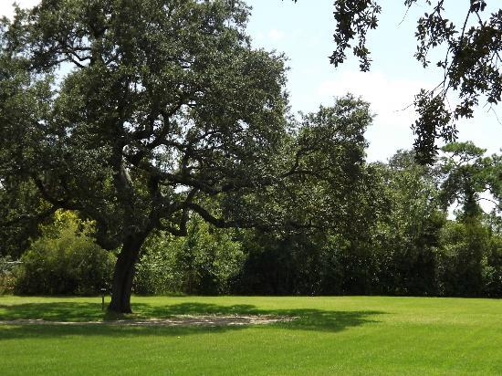 Best Western Premier Saratoga Resort Villas: Our lucious grounds await