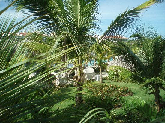 Paradisus Punta Cana: Love the trees
