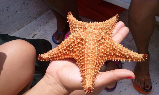 Phosphorescent Bay (Bahia Fosforescente): Hermosa estrella de mar