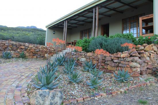 Petersfield Farm Cottages: beautiful aloes