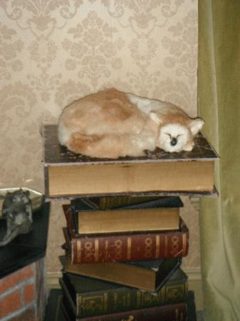 Farnsworth House Inn: Neat Stuffed Cat on Dante's Inferno. Jenny Wade Room