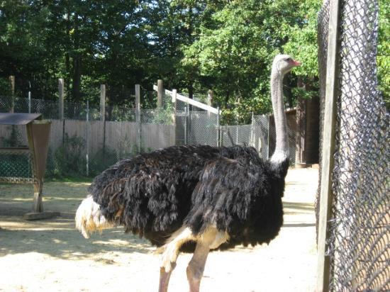 York's Wild Kingdom Zoo and Fun Park: Ostrich...