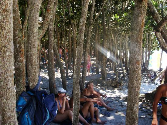 Lopes Mendes Beach: Las personas descansando entre la arboleda