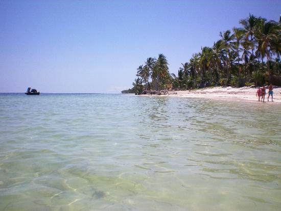 Catalonia Royal Bavaro: The green clear ocean with lots of fish