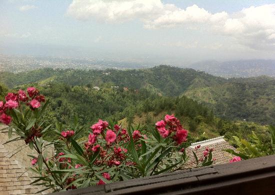 Strawberry Hill: Beautiful flora