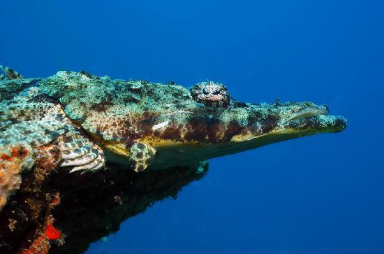 Coral Diving Club: Crocodile Fish at 'Tanikely marine Reserve'