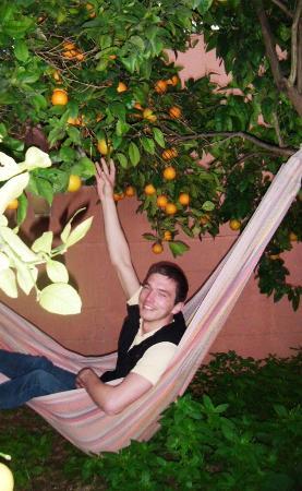 Boho Hostel : Bohos Orange trees