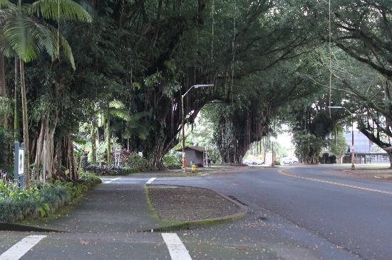 Uncle Billy's Hilo Bay Hotel: Banyan Drive