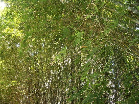 Catalina Hotel & Beach Club: bamboo garden