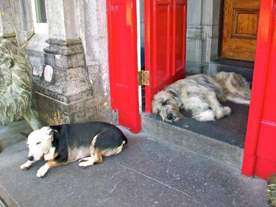 Ballyseede Castle : Einstein and Mr. Higgins - the Castle Guards