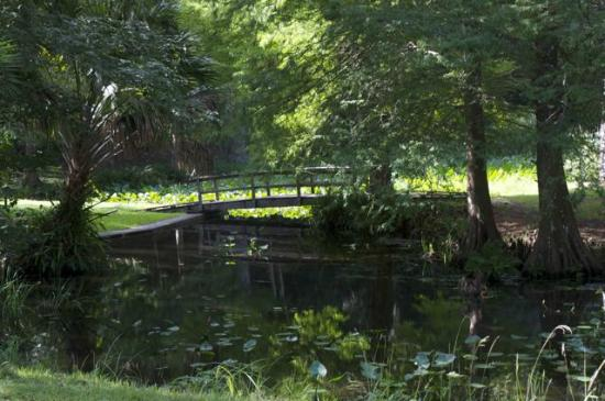 Beautiful Place To Visit Picture Of Ravine Gardens State Park Palatka Tripadvisor
