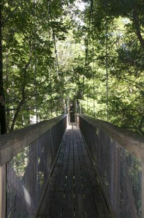Ravine Gardens State Park: Suspension bridge